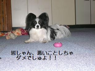 2011144.jpg