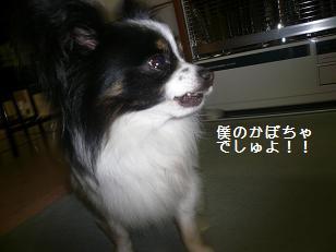 2011164.jpg