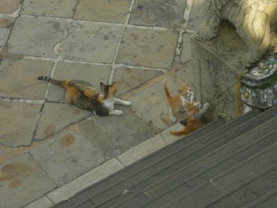 猫住民多かった