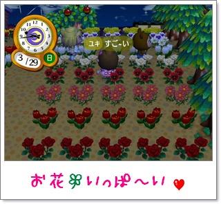 カカリコ村 お花