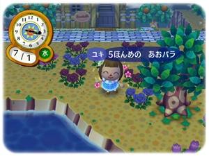 5本目の青バラ
