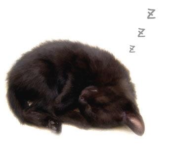 cat11-3-.jpg