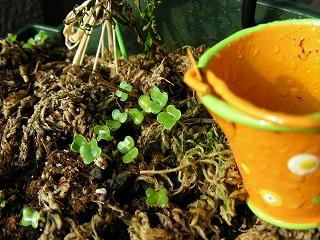 s-20090624 小さな庭で_003