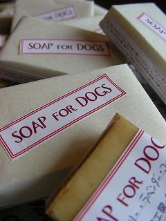 s-20090608 dog s_016