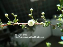 KIF_8646-1.jpg