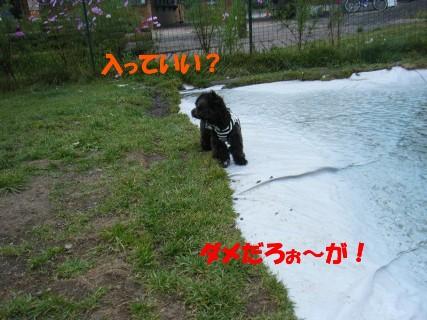 軽井沢 298