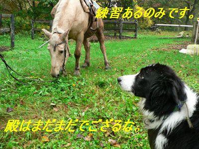 2008hokkaidou86.jpg