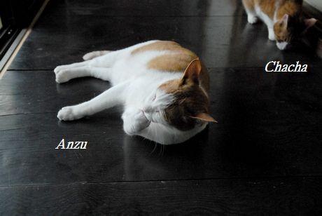 anzucyacya5.jpg