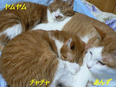 anzuyamuyamucyacya1_20081028211933.jpg