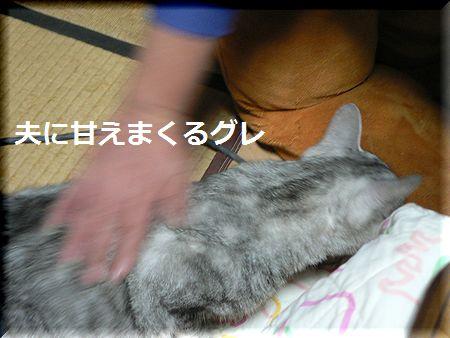 gure5.jpg