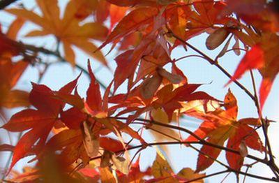 niwa10_20081215001033.jpg