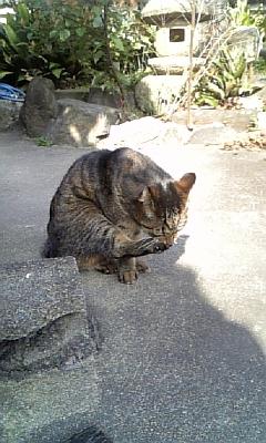 sasuke11.jpg