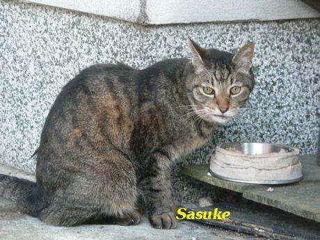 sasuke16.jpg