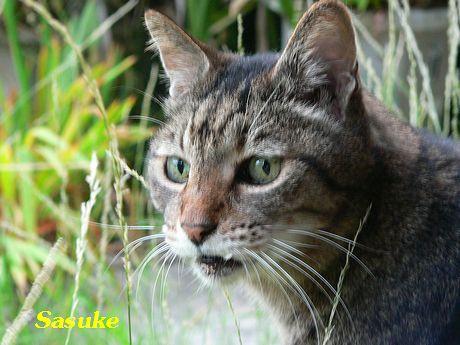 sasuke21.jpg