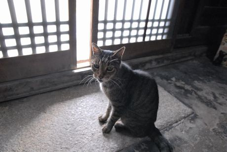 sasuke23.jpg