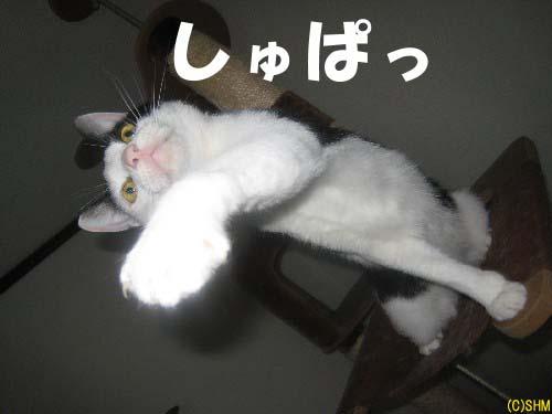 カモ?ン?