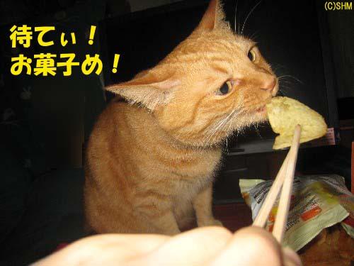 食いしん坊とら?