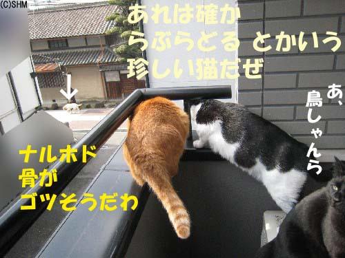 プレ・猫?