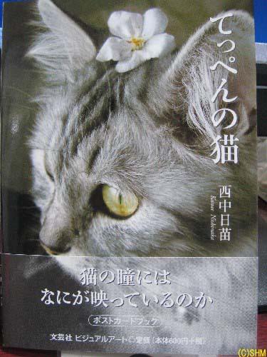 てっぺんの猫