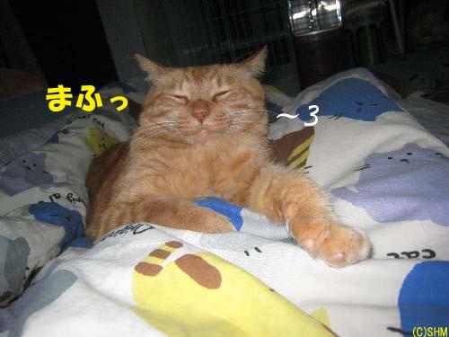 起こしておいて?