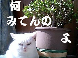PA0_0028.jpg