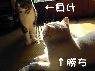 PIC04894.jpg