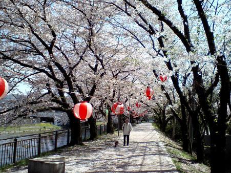 sakura0+???????????????_convert_20090411184419