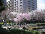 桜区役所1