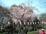桜20090319jpg