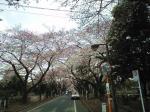 桜咲く090401