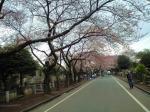 桜咲くその2 090401