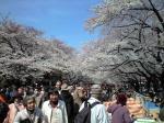上野公園の桜H21年春その1