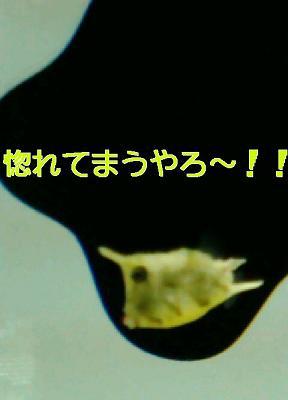 20081227121901.jpg