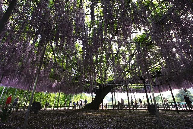 ashikaga2_8748.jpg