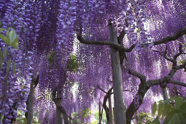 ashikaga2_8835.jpg