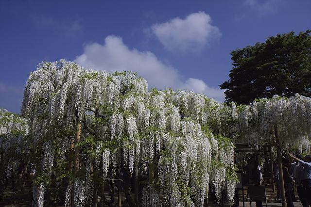 ashikaga_8874.jpg