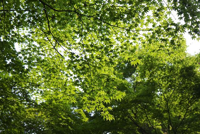 green_9566.jpg