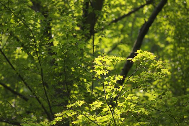 green_9821.jpg