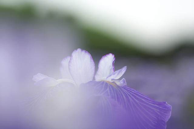 gyoda_0496.jpg