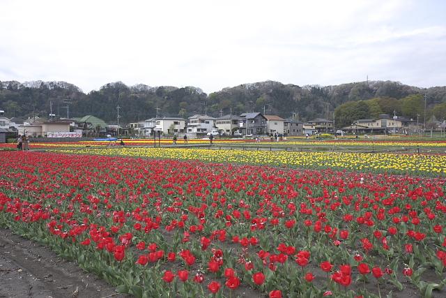 hamura-t_7664.jpg