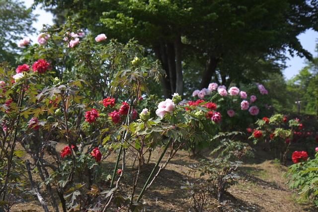higashi_8287.jpg