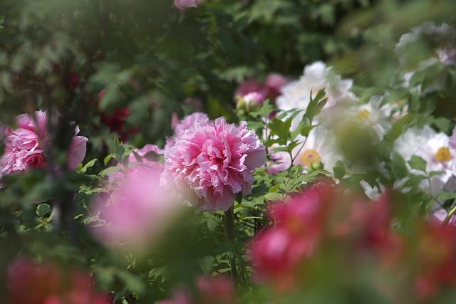 higashi_8293.jpg