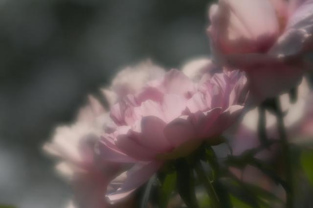 higashi_8317.jpg