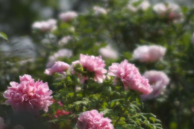 higashi_8334.jpg