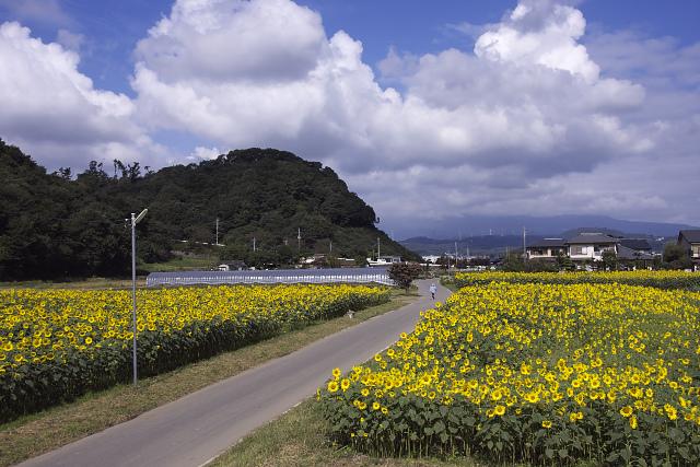 himawari08_2610.jpg