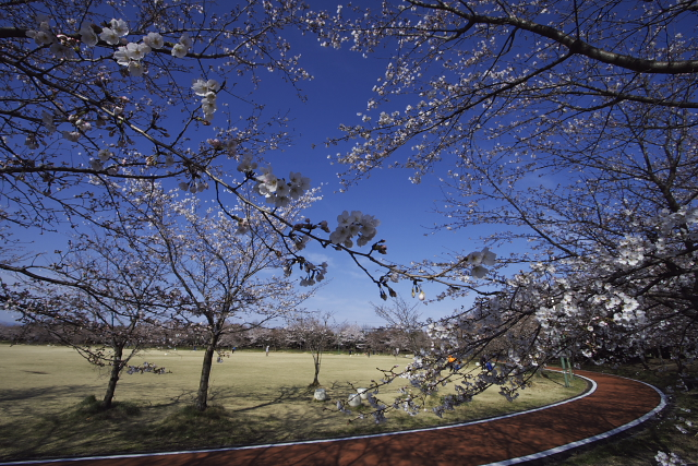 kumagaya_6966.jpg