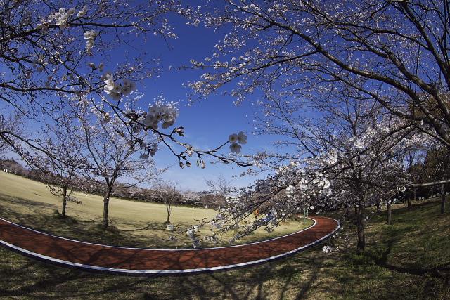 kumagaya_6967.jpg