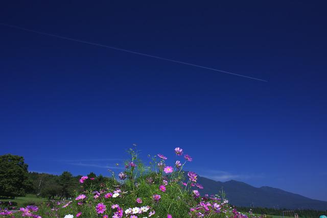 kurohime_2184.jpg