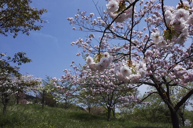 nagatoro2_8123.jpg
