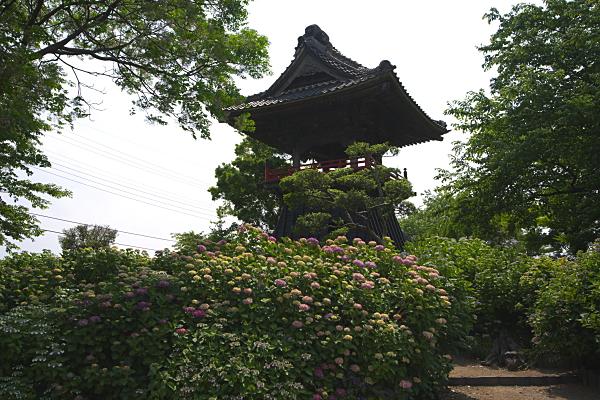 nougoji_2896.jpg